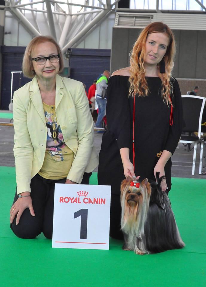 Geweldige Prestatie Voor Victoria Koster Op De Specialty Van De Worlddogshow !