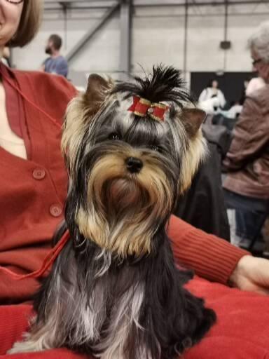 Groot Succes Voor Kennel RADA'S VICTORY Van Victoria Koster